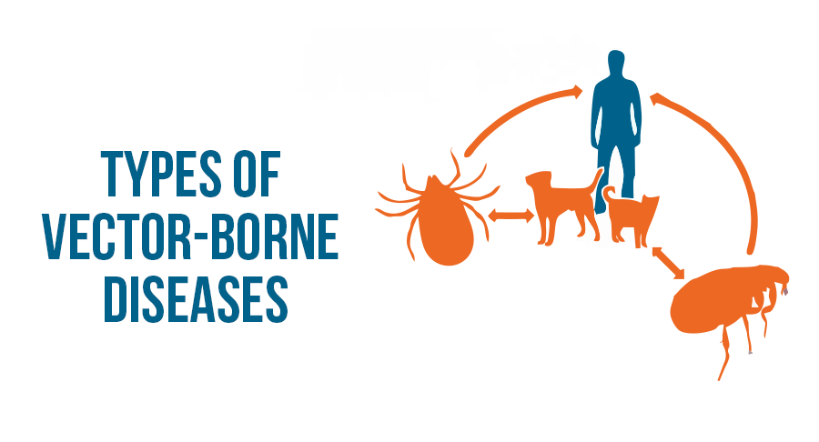 What are the Vector-Borne Diseases?